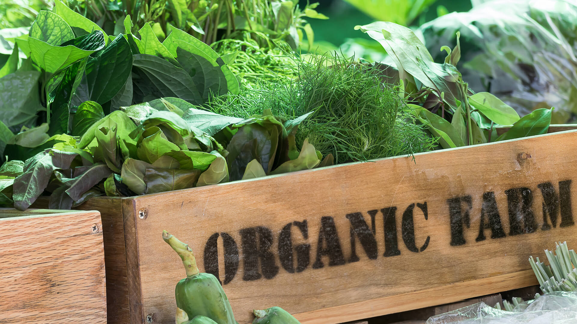 ss-organic-produce-farm