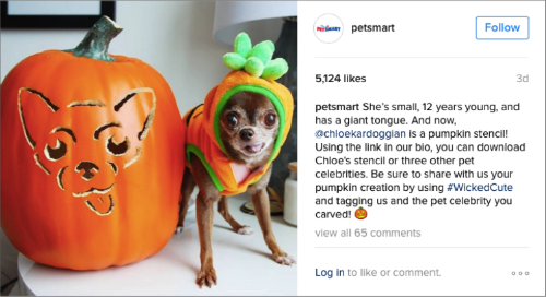 petsmart-halloween-dog
